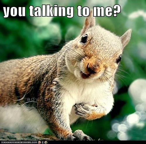 you talking to me squirrel flickr photo sharing. Black Bedroom Furniture Sets. Home Design Ideas