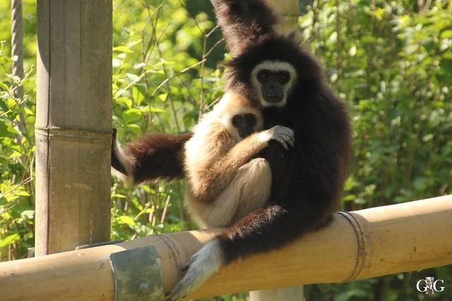 Tierpark Friedrichsfelde 29.05.201613