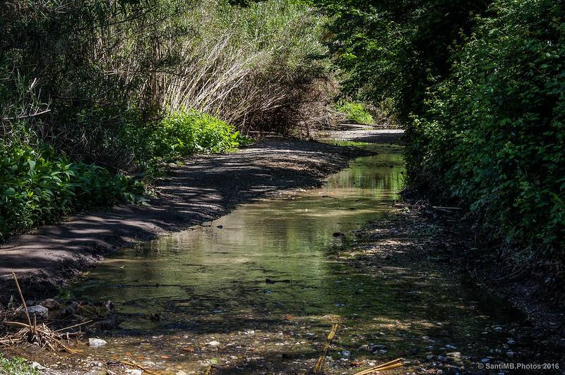 Rincón sereno en la riera de Vallvidrera