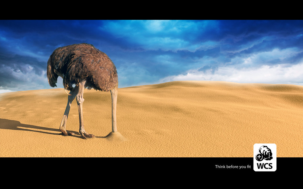 - WCS Ostrich Sand Wallpaper Another In The Series Of Anti-W… Flickr