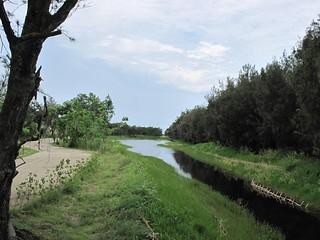 水樣森林步道。圖片來源:嘉義林管處