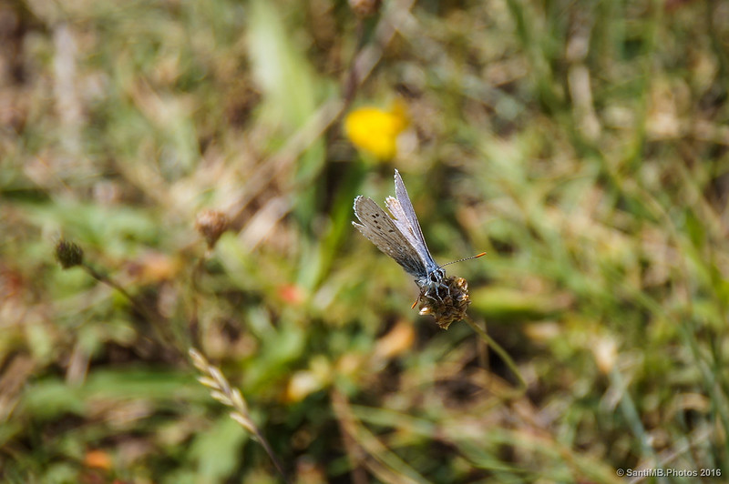 Una mariposa me observa