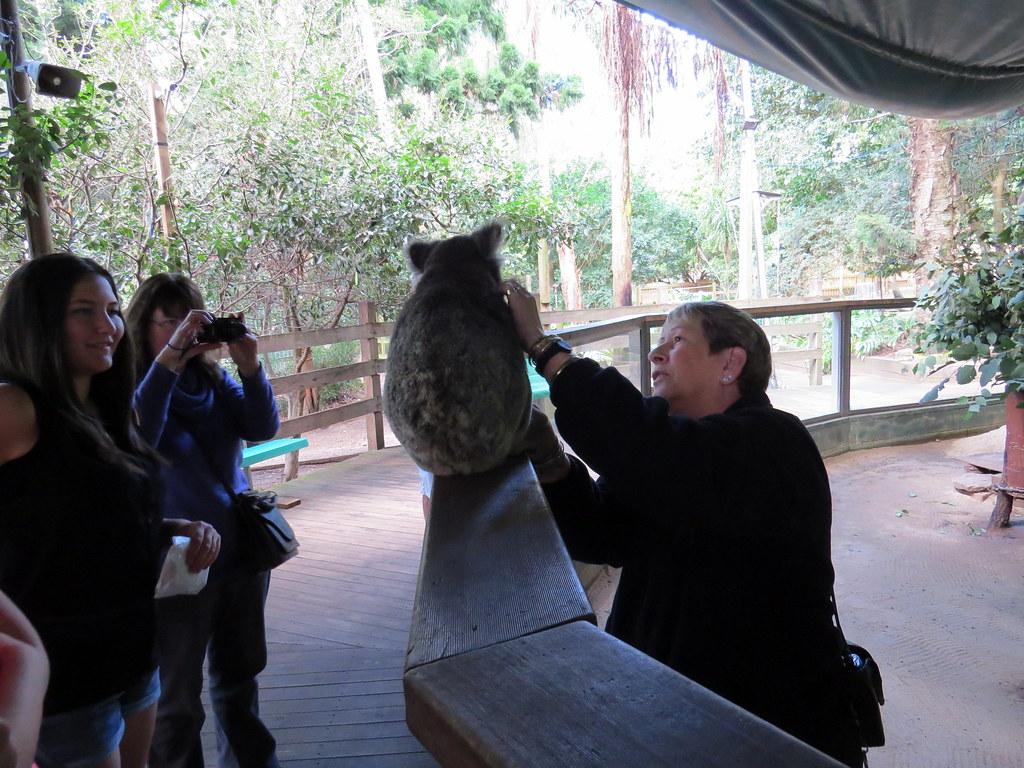Koala park sanctuary coupon