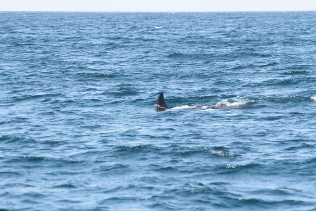 Whale Watching Kayak Tours San Diego
