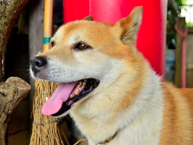 Ola Dog Name Meaning
