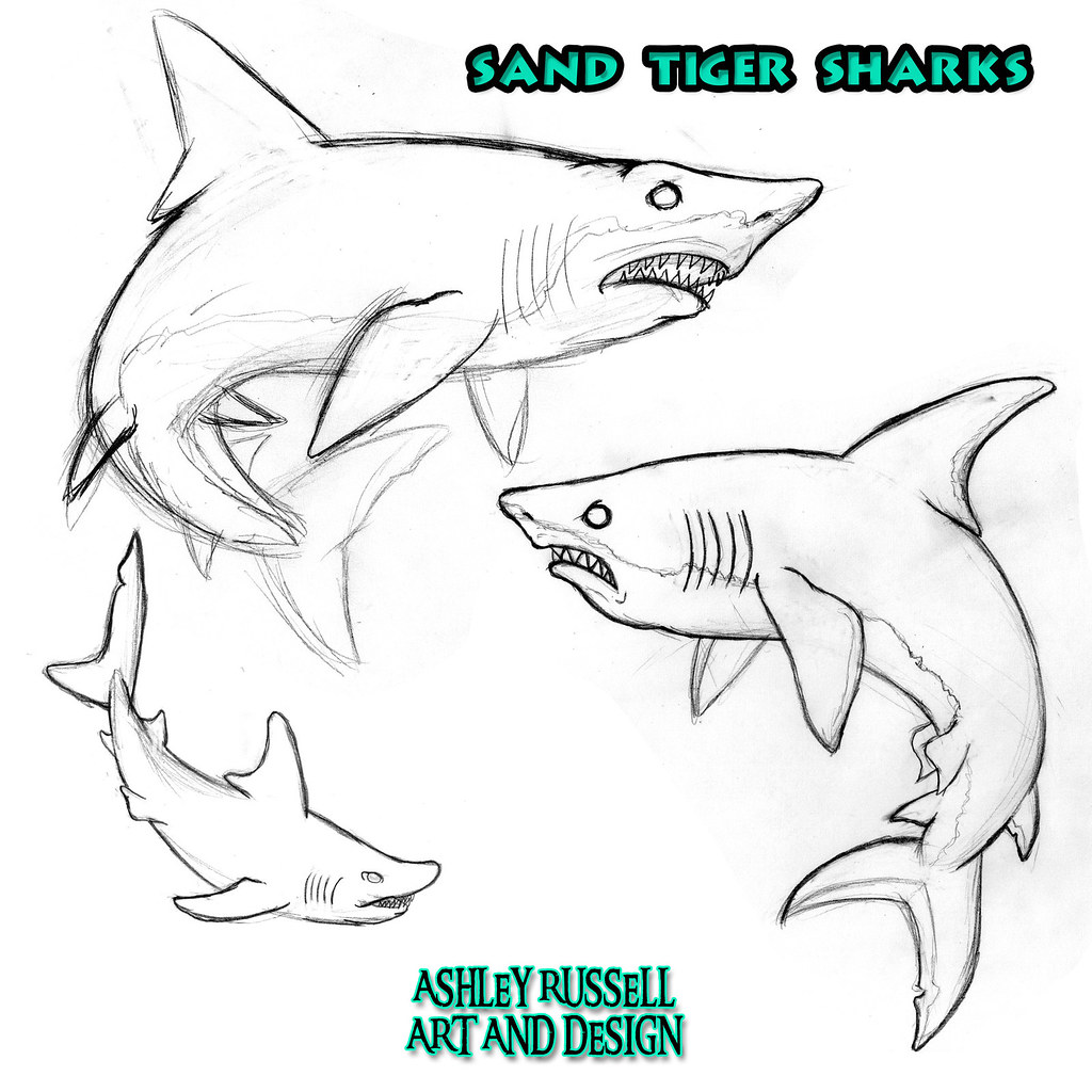Uncategorized Tiger Shark Drawing sand tiger shark character 2014 graphite on paper edited flickr