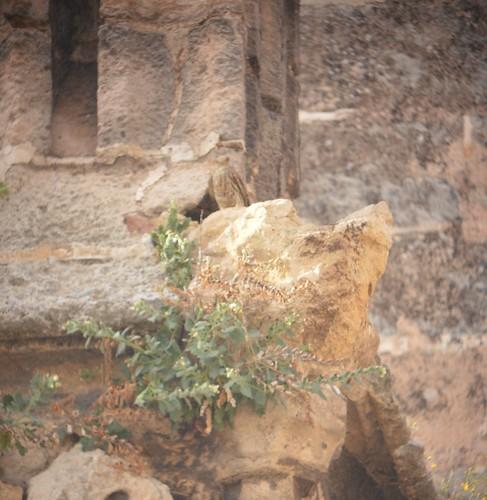 AionSur 26959466784_19a382f02b_d La catedral de Sevilla, dormitorio de la colonia más grande de Europa de cernícalos Cultura Medio Ambiente