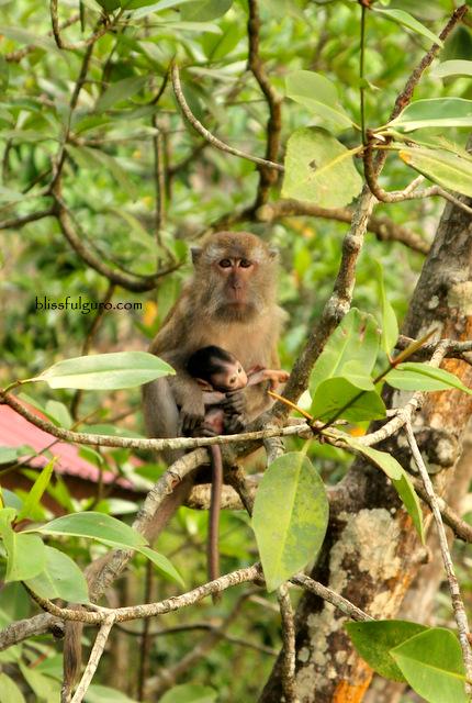 Kilim Karst Geoforest Park Langkawi Malaysia