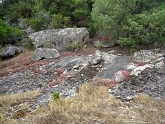 Trace de Punta Piscia : une clairière