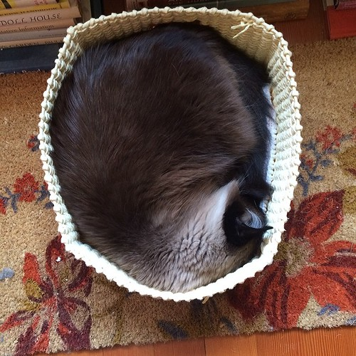 Sure, I fit. #charlenebutterbean #ibkc #cat #catsofinstagram