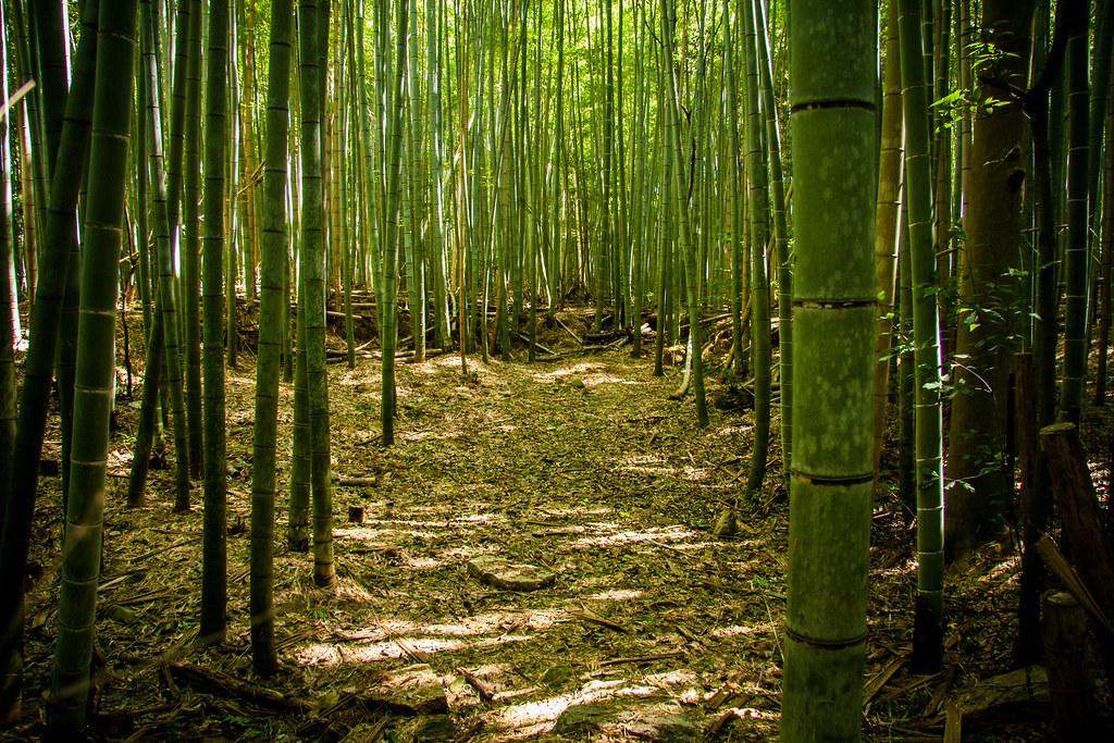 Bamboo Wall Painting