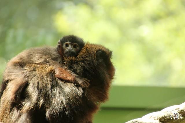 Sonntags-Besuch Zoo Berlin 03.07.201633