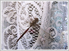 Dragonfly decided to fly into our home, February 25 2014