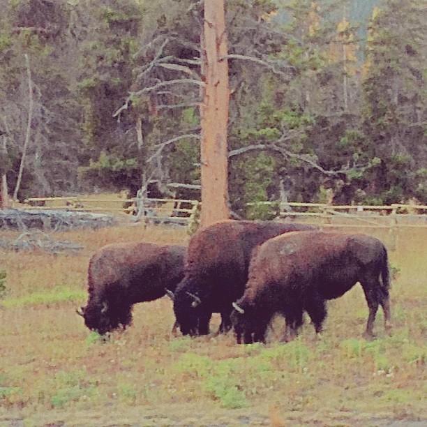 Singles in buffalo wv