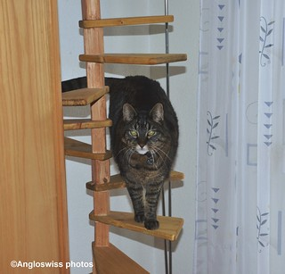 Tabby on her ladder