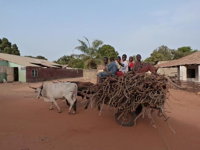 Carro tirado por un buey en Gambia