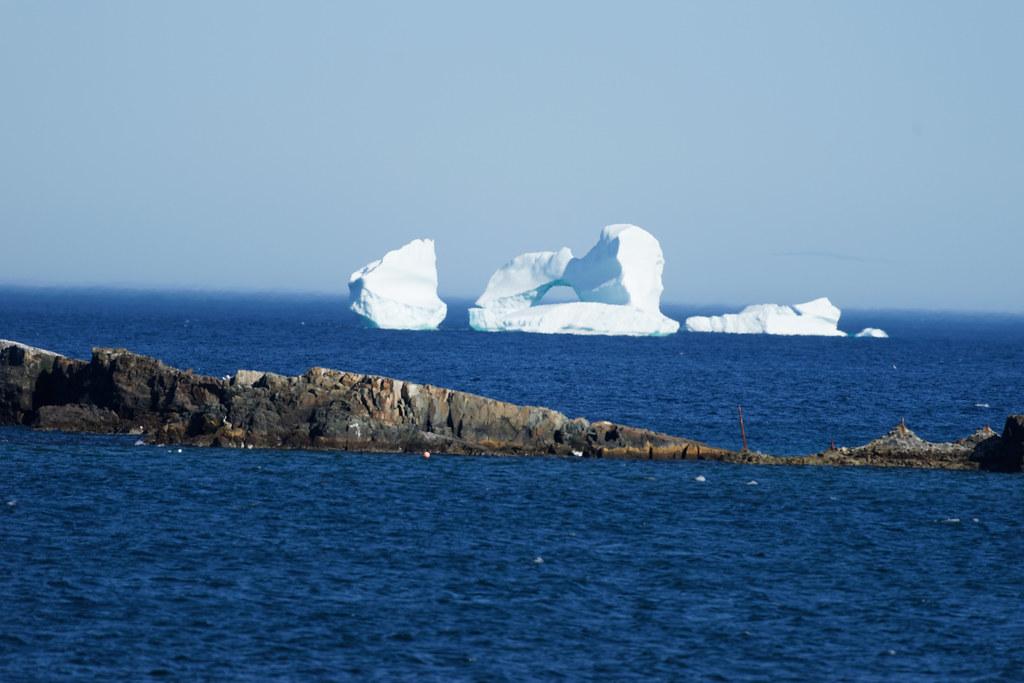 Bonavista Iceberg