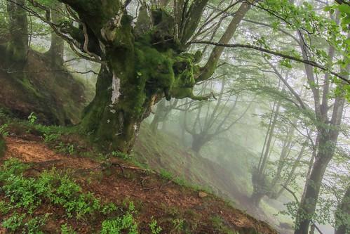 Parque Natural de #Gorbeia #Orozko #DePaseoConLarri #Flickr - -608