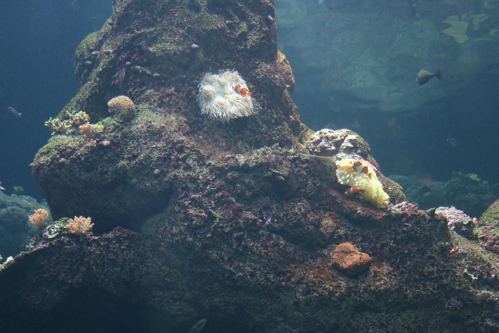 Steinhart Aquarium Microcosmos42 Flickr
