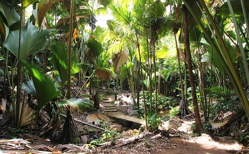 Vallee de Mai Nature Reserve on Praslin Island, Seychelles