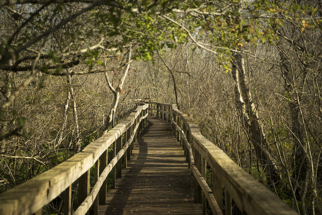 28 Foot Board Walk : Crowley boardwalk this is part of a half mile long