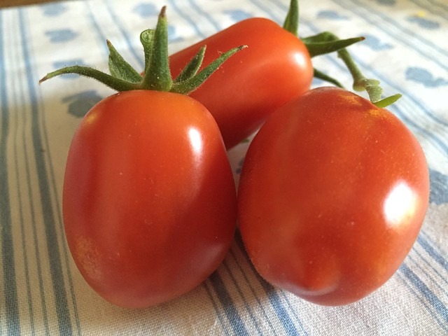 The fist crop of San Marzano tomatoes
