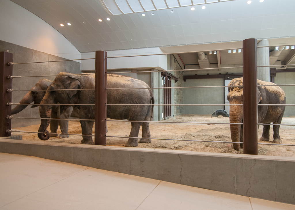 Asian Elephant Bozie Debuts at the Smithsonian's National ...
