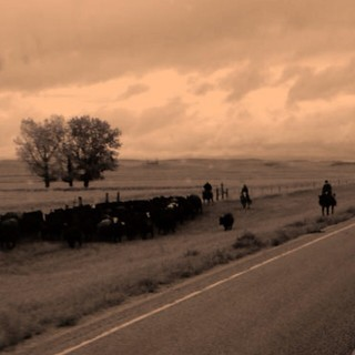 CATTLE DRIVE 2013(ZOOM IN FOR DETAILS) | by aspry1957