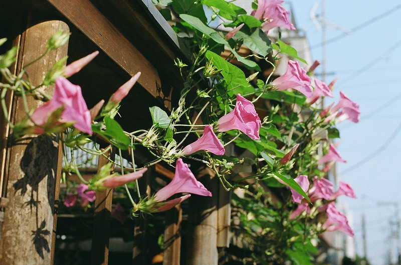 谷中 by Nikon FM2 2016年6月18日
