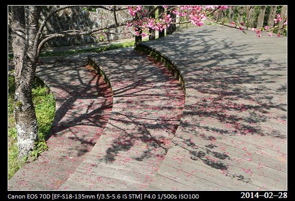 20140228_CherryBlossom2