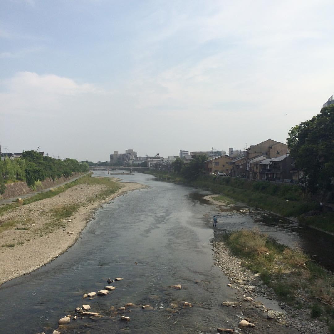 今日の鴨川 #kyokamo 鮎釣り1人。