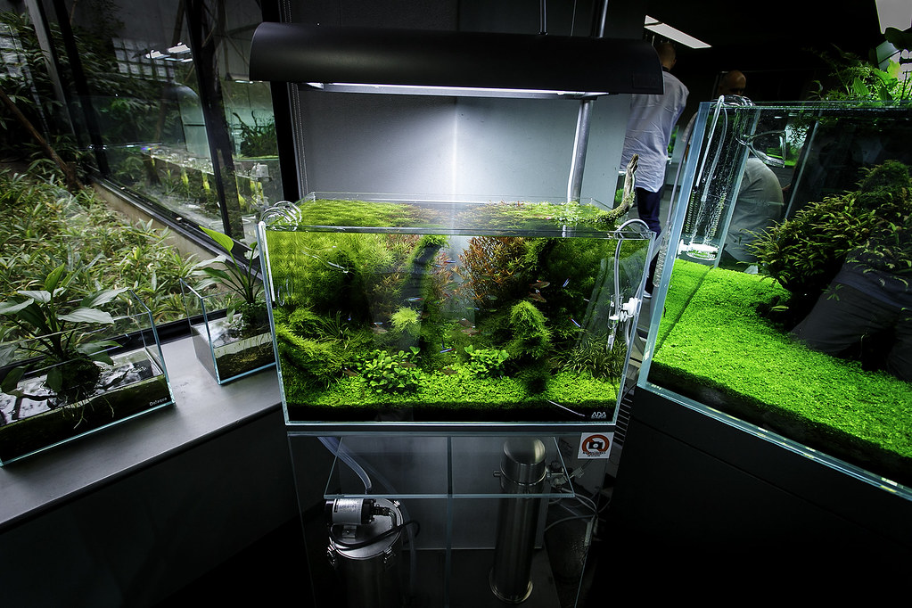 ADA Nature Aquarium Gallery | Beautiful moments of the ...