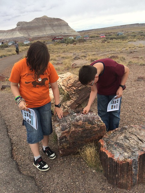 petrified forest national park logs