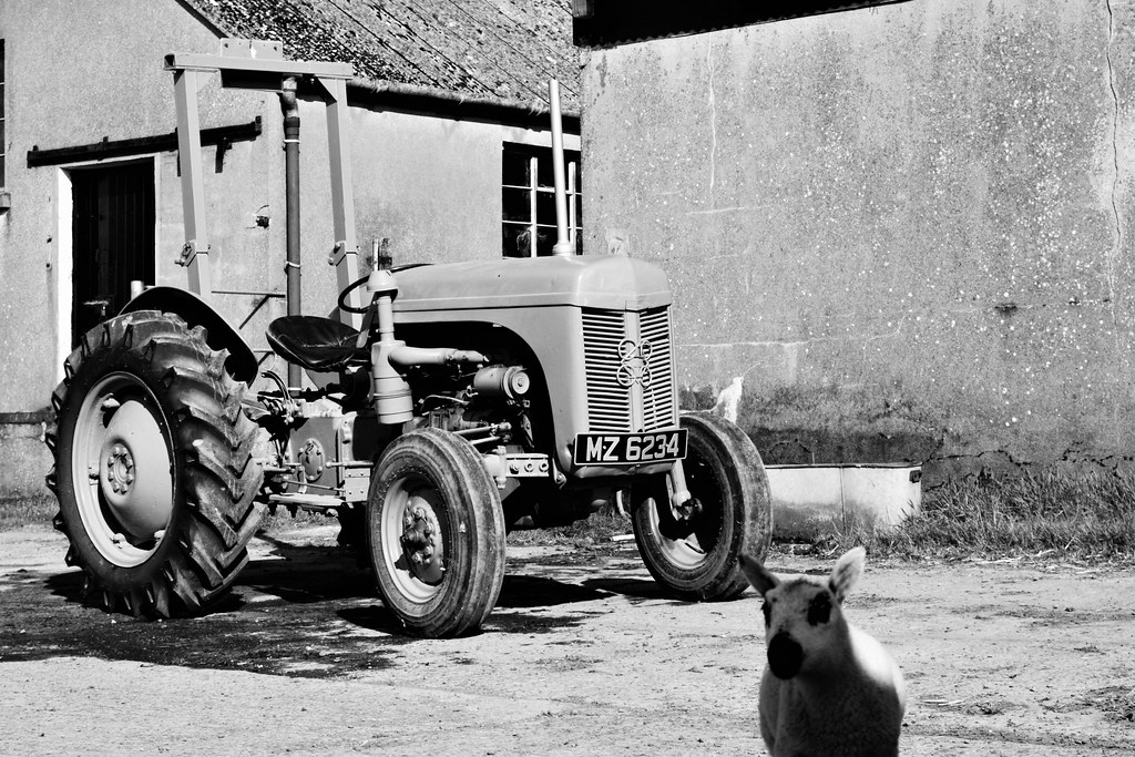 The Dogs of Greenhill Farm: Black & White Sunday #25 ::: The Cleaning Crew