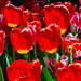 6585 tokyo ambassade bloemen2-1