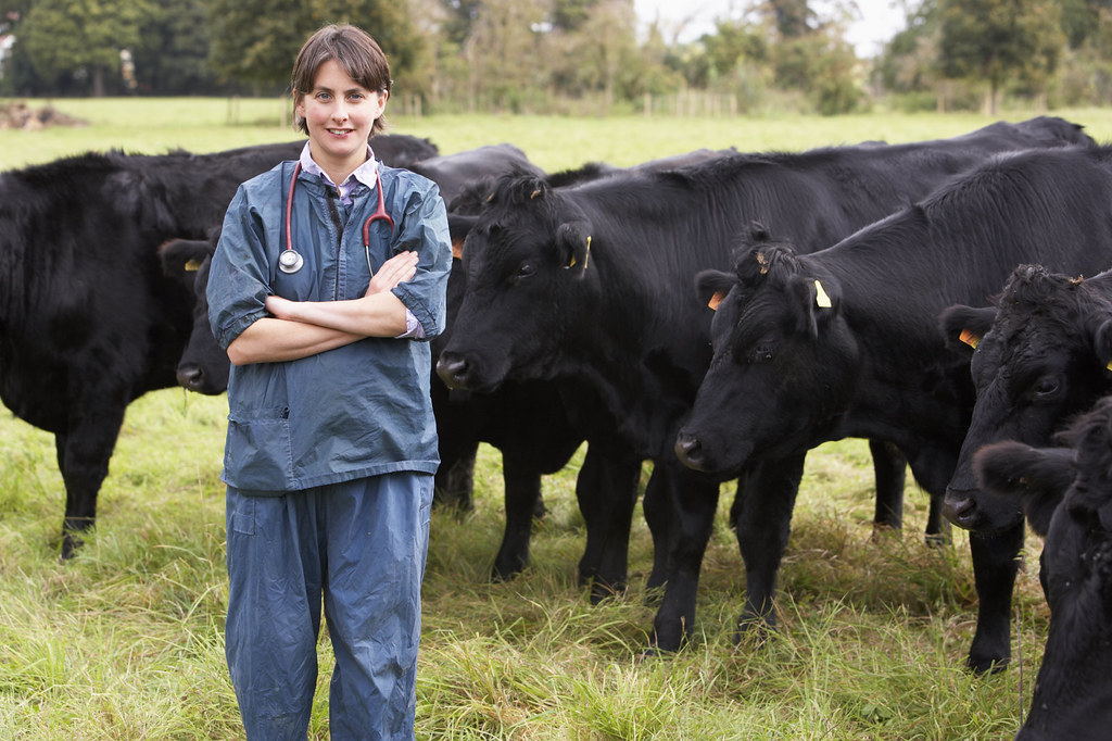 A veterinarian in field with cattle | The Veterinary ...
