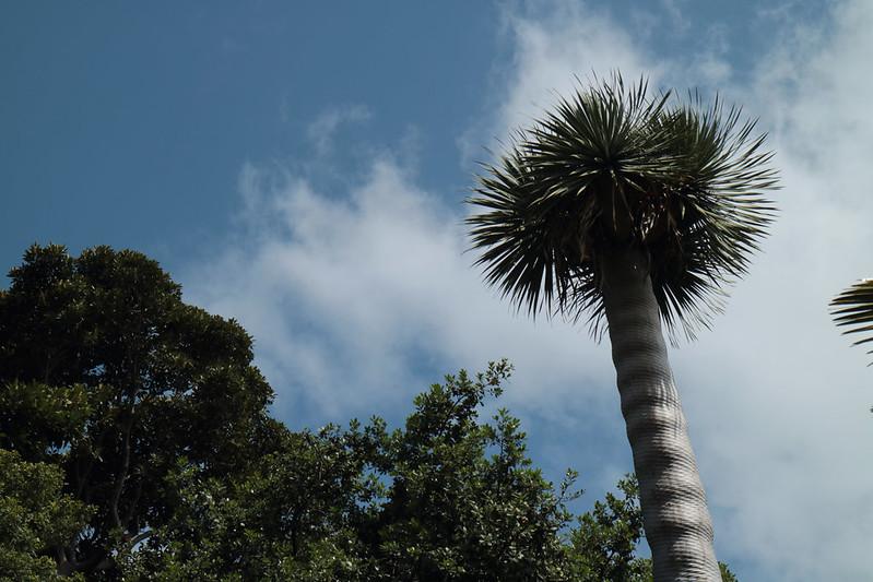 Jardín de Aclimatación de la Orotava - Tenerife