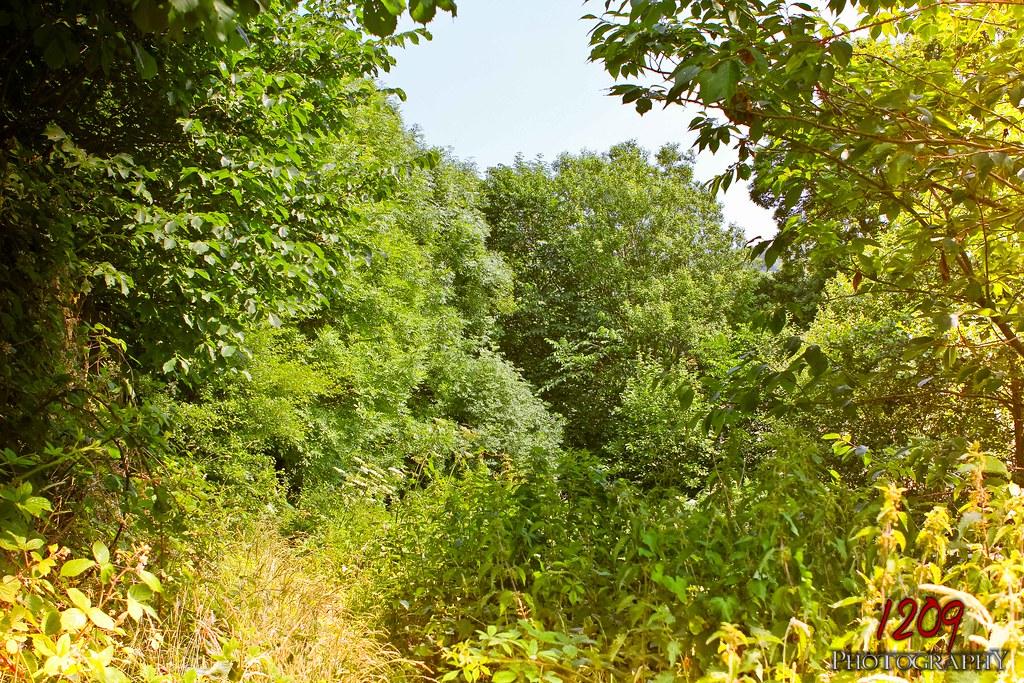 Overgrown Bushes Amp Trees Simon Asquith Flickr