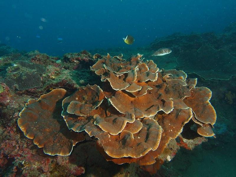 八斗子潮境公園,珊瑚生態良好。圖片來源:林祐平。