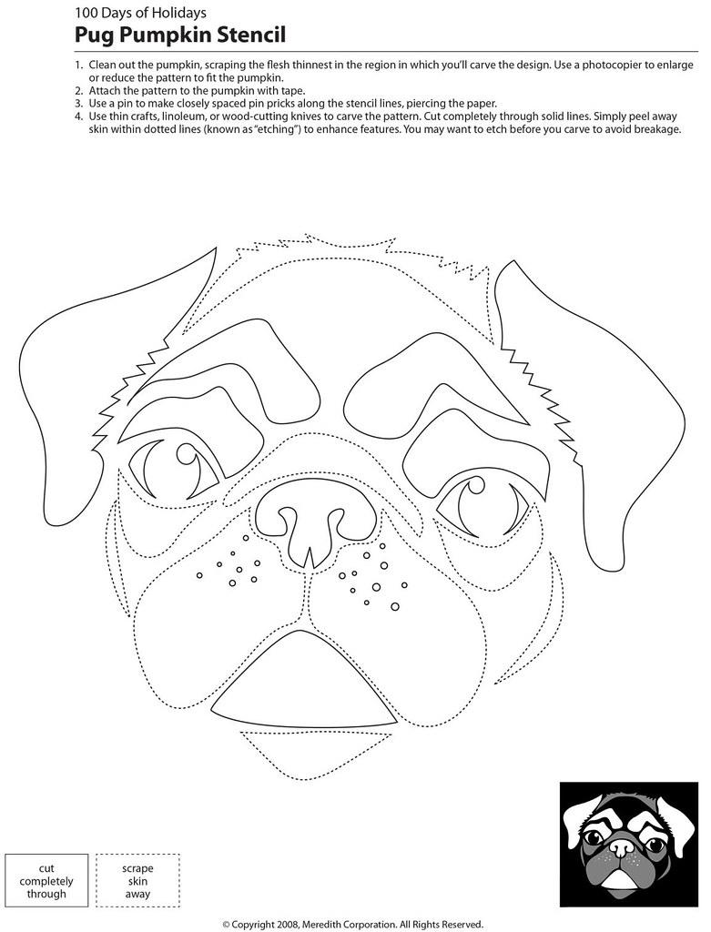 Pumpkin Pug Stencil Mutt Uglies Flickr