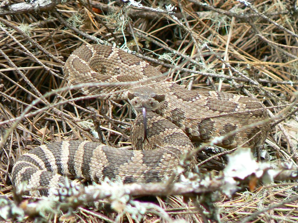 Snake In Grants Pass Oregon Snake In Grants Pass