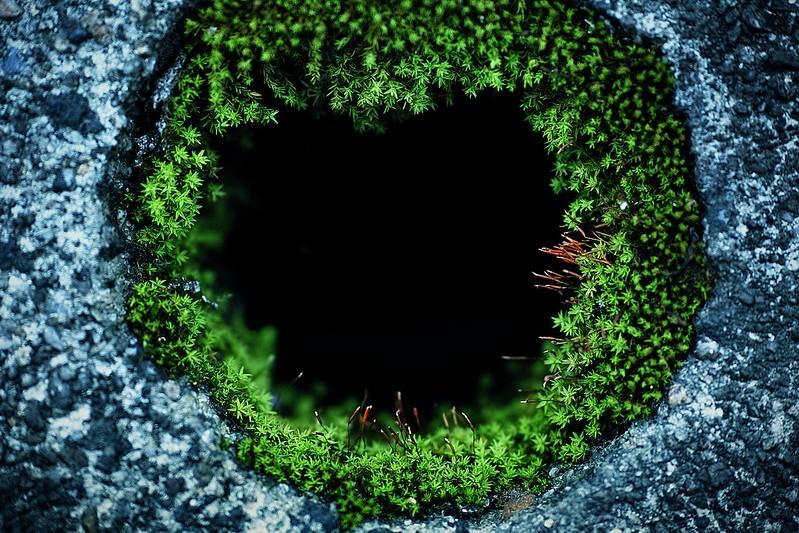 moss hole