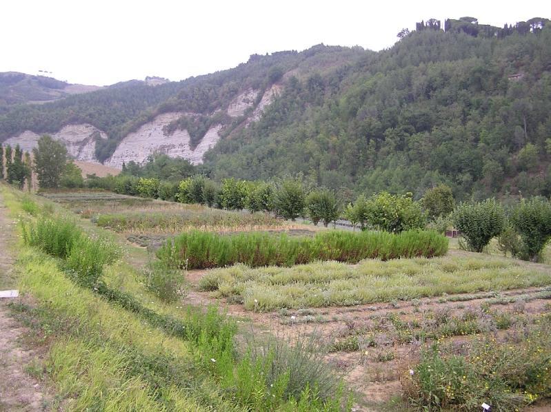 Giardino delle erbe casola valsenio ra giardino delle for Giardino 3d gratis italiano