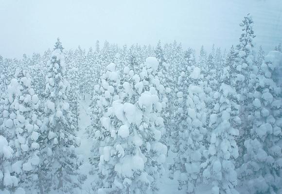 日本森吉山樹冰28