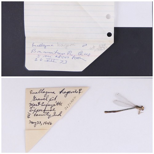 The two photos show the difficulty in reading localities on specimen envelopes when written in cursive.