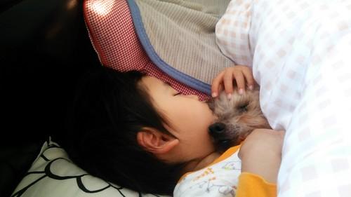 赤ちゃん ペット