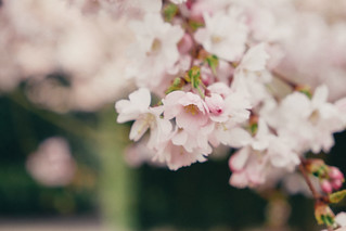 Blossom | by Ian_Boys
