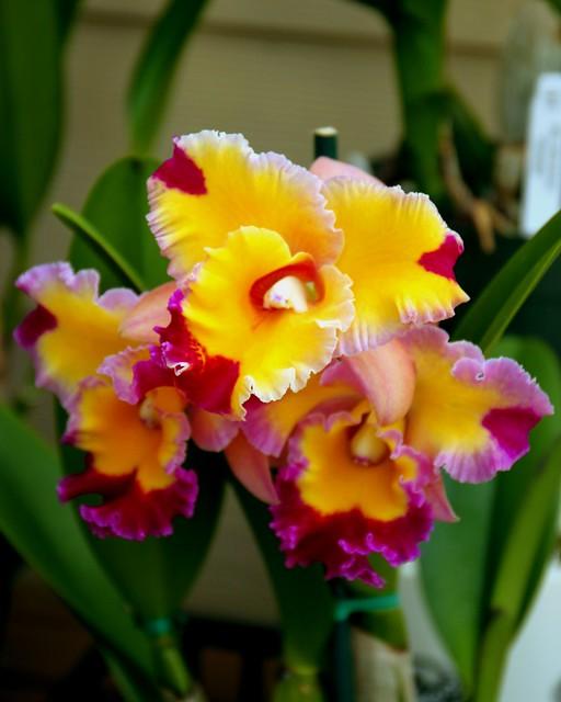 Akatsuka Orchid Gardens Big Island
