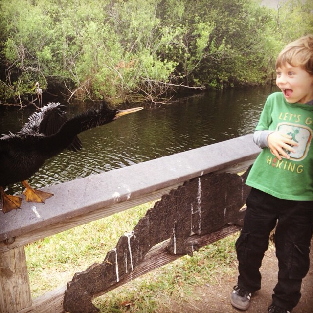Finn's failed attempt to make friends with a sunning Anhinga
