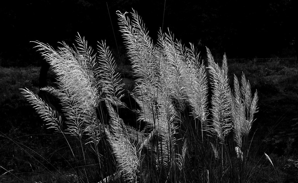Black And Whit Patterns In Nature Art